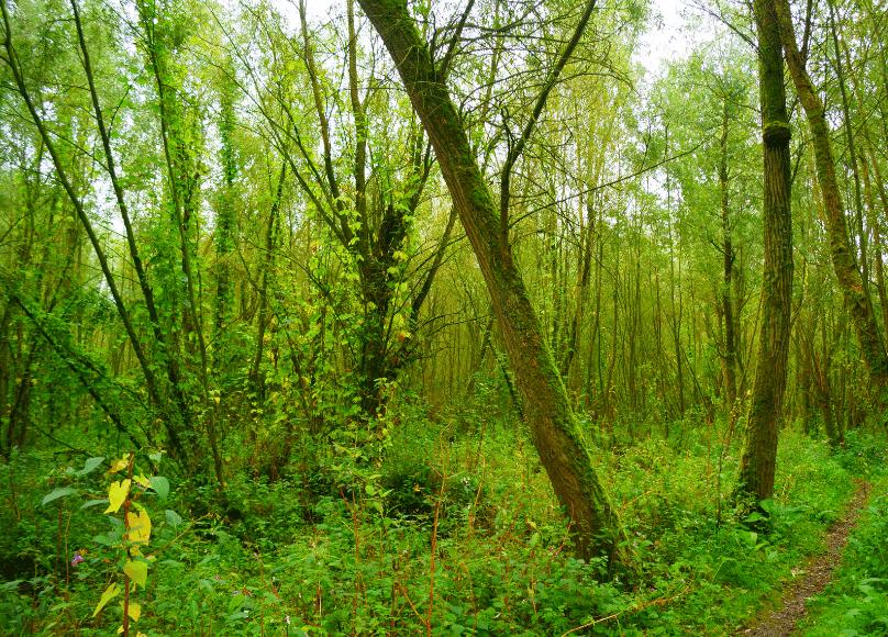 Rhoon-landschap-4.png